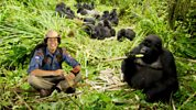 Andy's Wild Adventures: 6. Mountain Gorillas