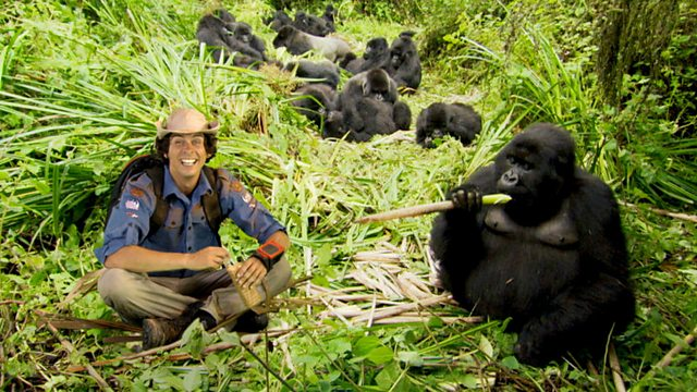 Andy's Wild Adventures: Series 1: Mountain Gorillas