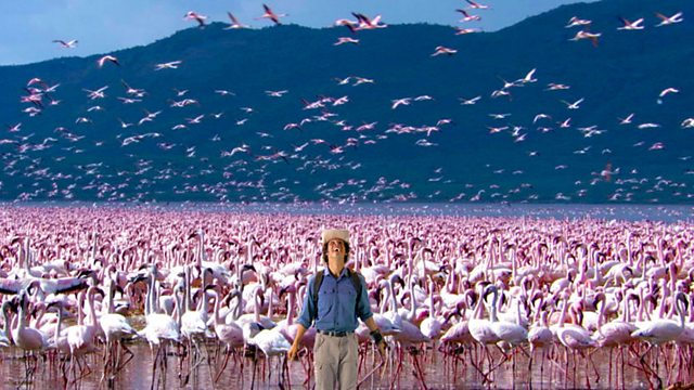 Andy's Wild Adventures: Series 1: Flamingos
