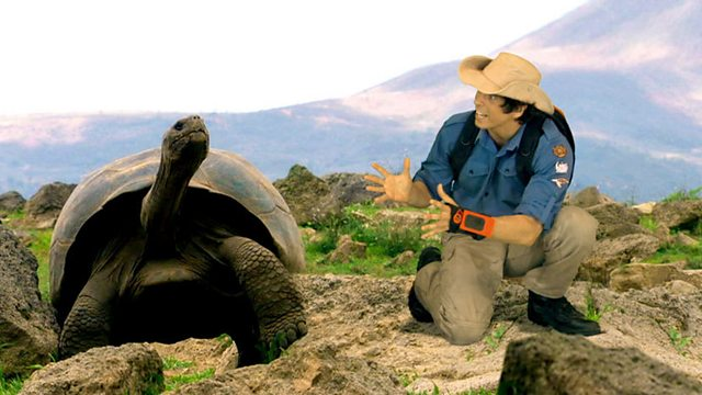 Andy's Wild Adventures: Series 2: Giant Tortoises
