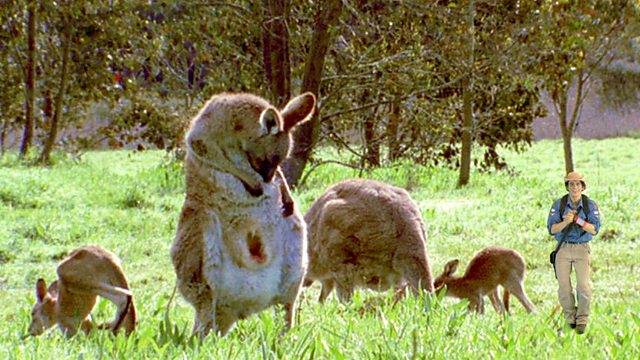 Andy's Wild Adventures: Series 2: Marsupials