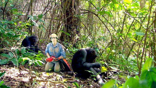 Andy's Wild Adventures: Series 2: Chimpanzees