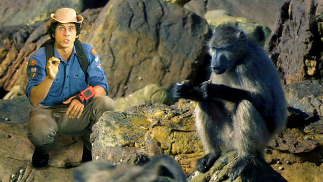 Andy's Wild Adventures: Series 2: Chacma Baboons