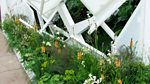 RHS Chelsea Flower Show: 2013: Episode 9