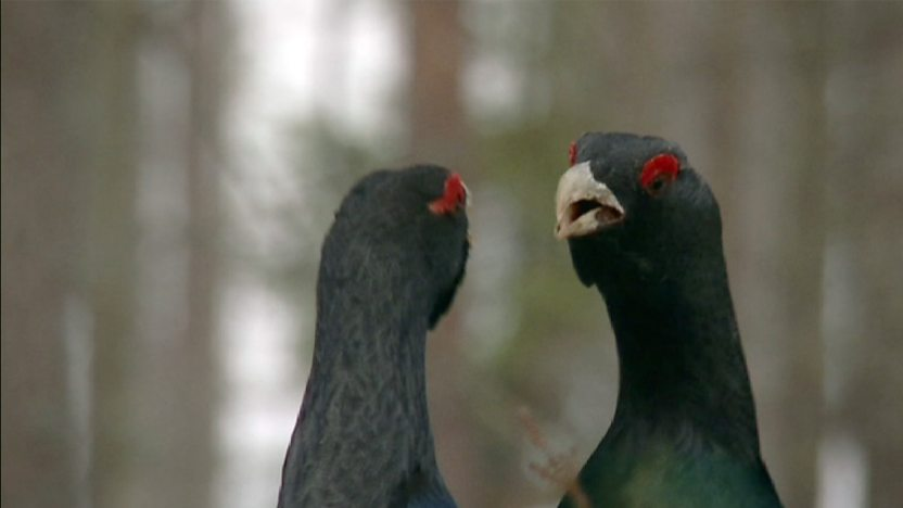 The Mirror Bird