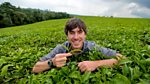 This World: The Tea Trail with Simon Reeve
