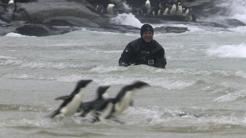 Steve in the sea with some penguins.