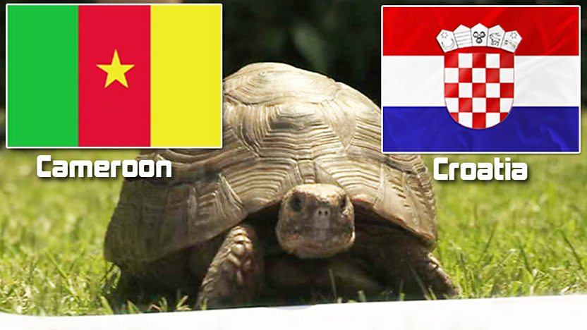 Shelley and Cameroon and Croatia flags