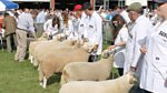 Royal Welsh Show: 2014: Day One