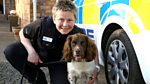 Animal Saints and Sinners: Police Dog and Suspected Illegal Boxer Breeding