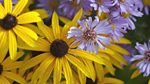 Gardeners' World: 2014: Episode 30