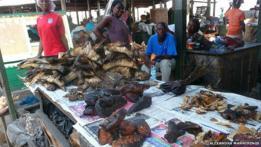 Entre la carne silvestre que se vende en Acra, se incluyen agutíes, murciélagos, pescado y antílope