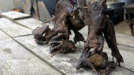 Carne de animales silvestres