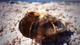 Pez muerto en el mar de Salton, California