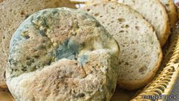 Pan con moho