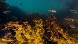 Isla de Bare en la bahía de Botany, Sídney