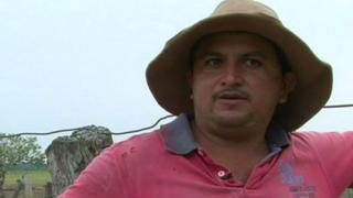 Vacuno muerto en la tierra seca en Casanare