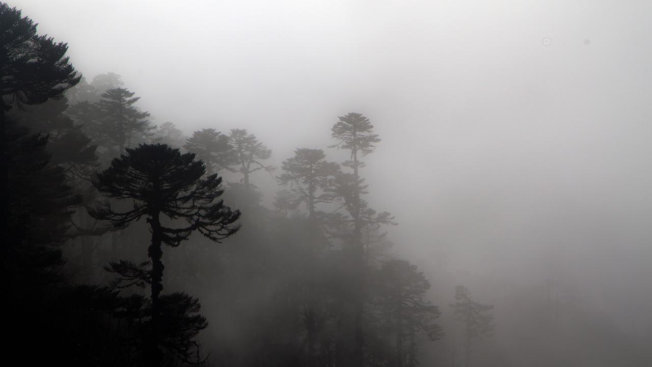 A misty forest (Credit: Credit: Stuart Butler)