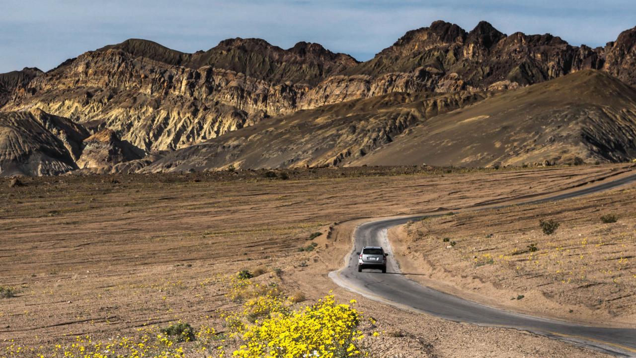 A patch of desert gold (Geraea canescens) flowers along the roadside (Credit: Credit: Sivani Babu)
