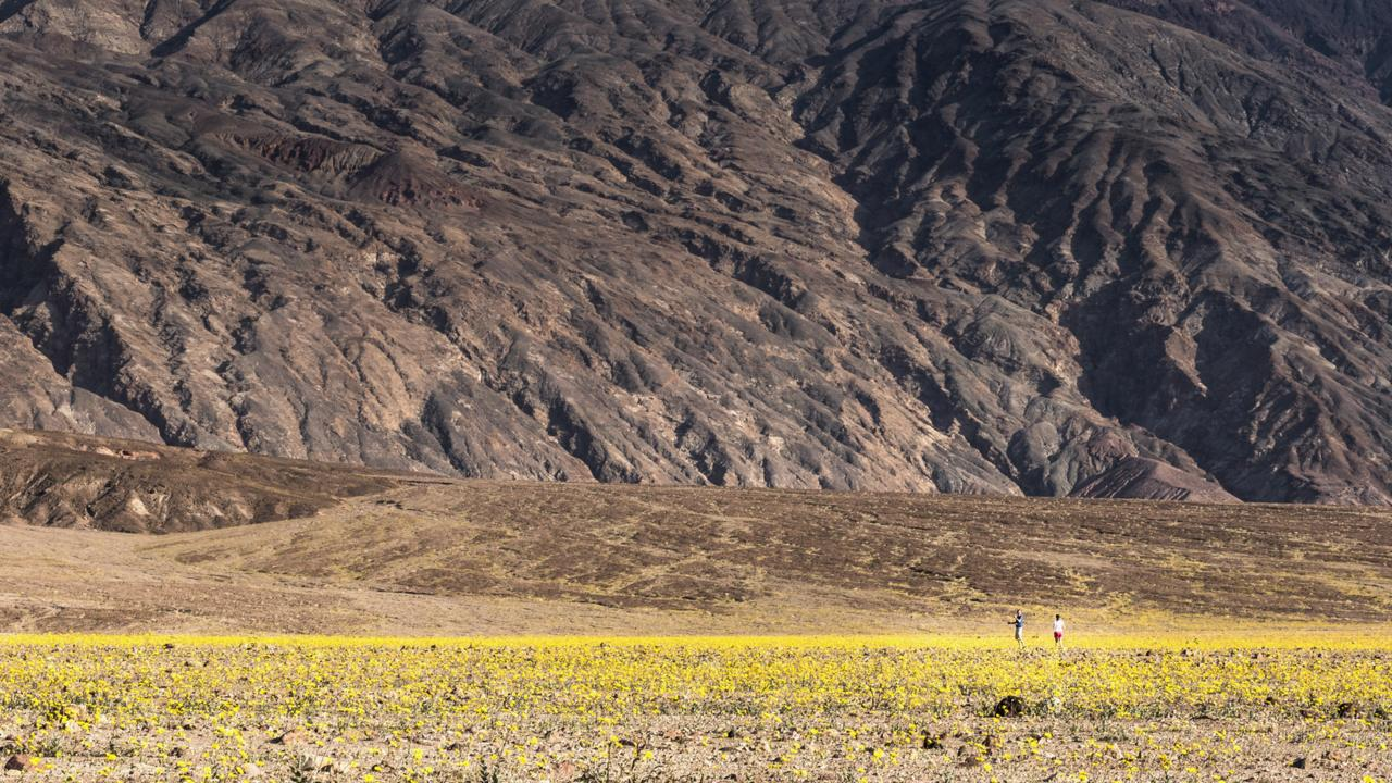 Visitors to Death Valley explore an expanse of desert gold flowers during the super bloom (Credit: Credit: Sivani Babu)