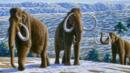 Woolly mammoth (Credit: Copyright: Science Photo Library)