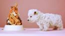 Chemically enhanced pet food (Credit: Copyright: Thinkstock)