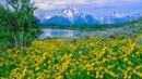 wildflowers Jackson Hole Wyoming (Credit: Ron and Patty Thomas/Getty)