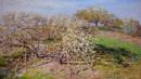 Spring (Fruit Trees in Bloom) (Credit: Claude Monet/Phaidon)