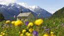 Valais, butterflies, Switzerland (Credit: Christian Perret/Valais/Wallis Promotion)