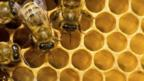 How to work as a team? Managers could learn lessons from the hive (iStockphoto)