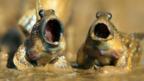 Muddy warblers