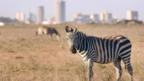 Nairobi: Safari in the city