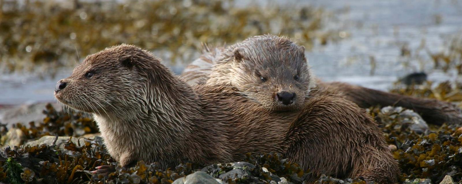 Earth - Record how, when and where otters live on the coast