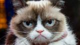 Few pop culture memes are as successful or recognisable as Grumpy Cat. But do they spell the end for the traditional film star? Peter Bowes reports.