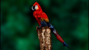 A woman painted like a parrot