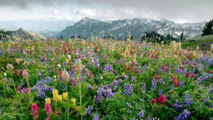 Suddenly flowering plants were all over the place (Credit: Science Photo Library / Alamy)