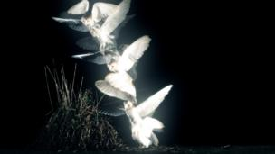 How does a barn owl spot its prey? The slow-motion camera captures the action of a strike
