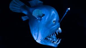 Deep-sea anglerfish (Credit: Helmut Corneli / Alamy)