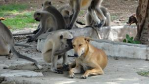 A private conversation between monkey and dog (Credit: Karan Shah)