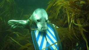 Seal meets diver, but is it a friendly encounter? (Credit: Keith McKay)