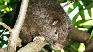 A new rodent has been discovered, named James Bond