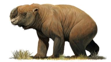 Diprotodon octatum: largest marsupial (Credit: Stocktrek Images Inc/Alamy Stock Photo)