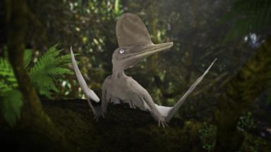 A short video on evolution