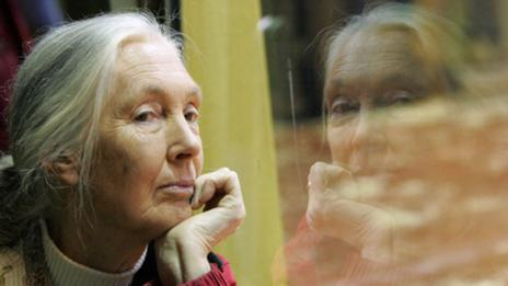 Jane Goodall (Getty Images)