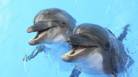 Dolphins (Thinkstock)