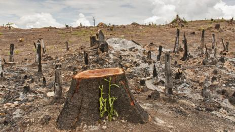 Deforestation (Thinkstock)