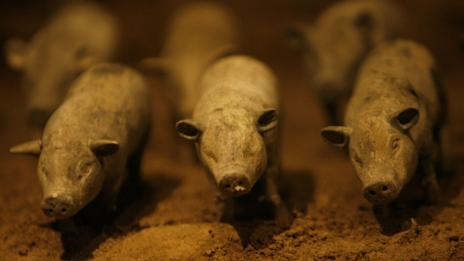 China pigs (Getty Images)