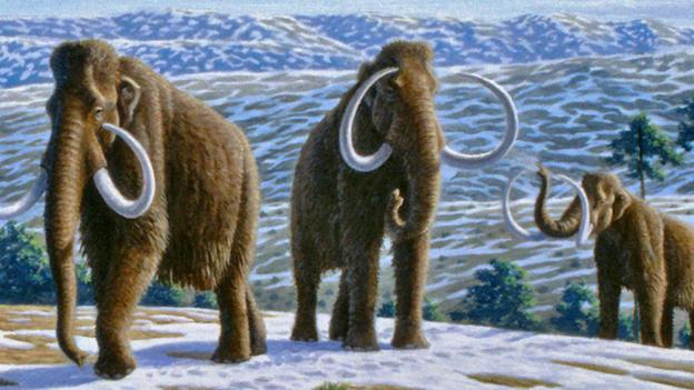 Bbc Future Will We Ever Clone A Mammoth