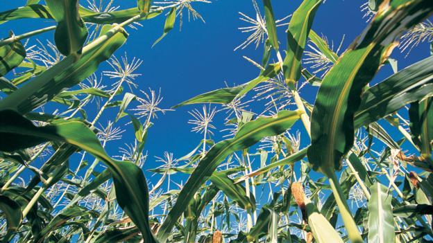 Fertilisers: Enriching the world's soil