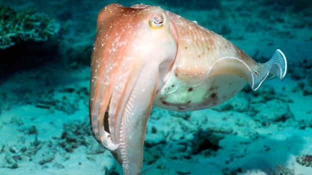 Cuttlefish provide smart fashion tips